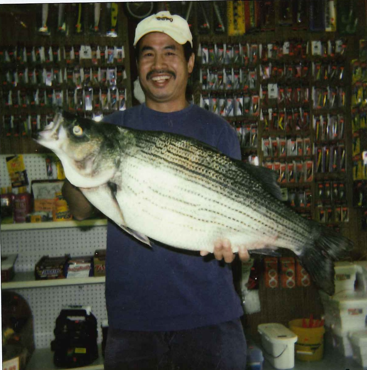 Wiper (Hybrid Striped Bass)