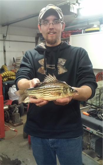 BRETT MCCLAIN's Yellow Bass